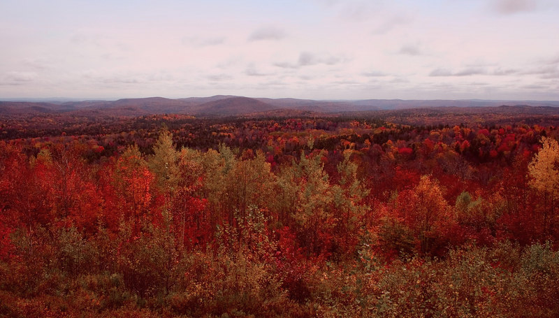 Beautiful Fall color as far as the eye can see.