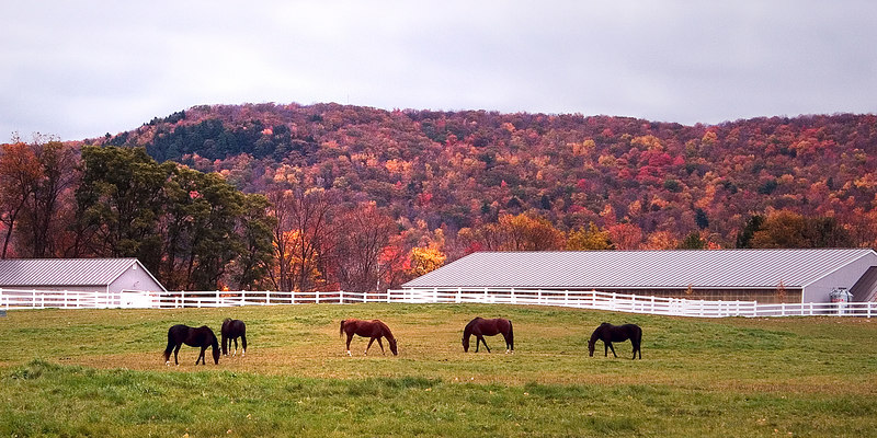 A horse farm in a lovely setting framed by a hillside dressed in a patchwork of Fall colors.