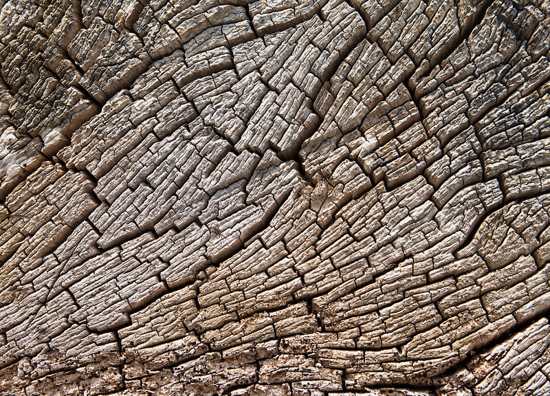 Driftwood Stump Texture