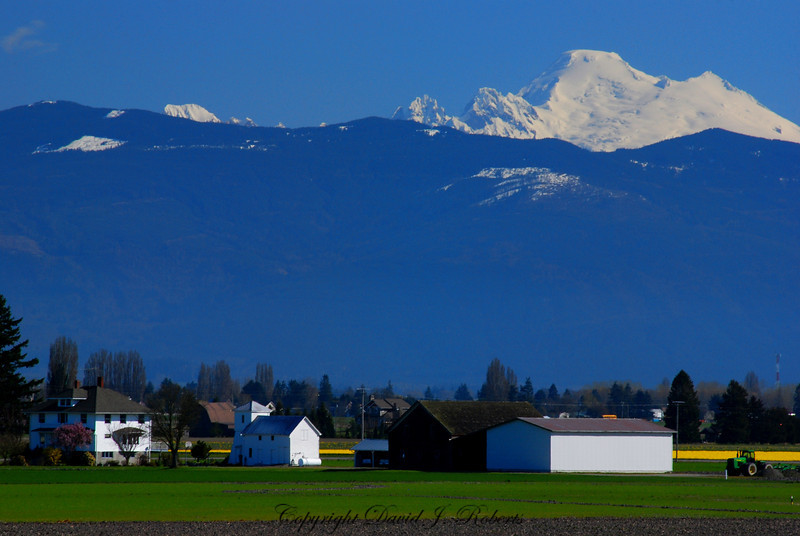 Mount Baker appears to hang over the Skagit Valley
