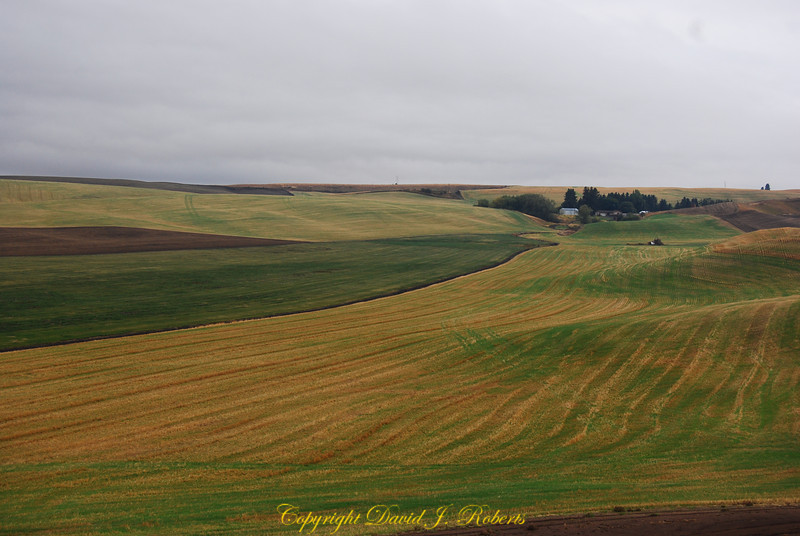Palouse hills with fall wheat near Colton Washington