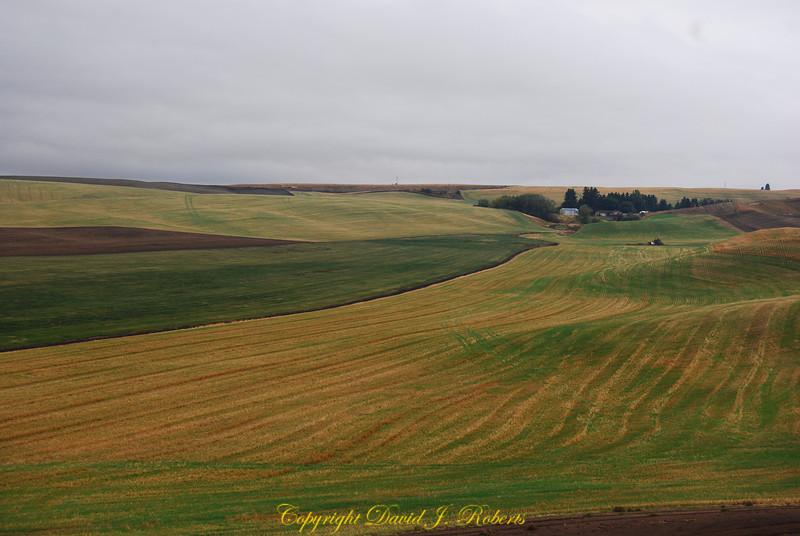 Palouse hills with fall wheat near Colton Washington