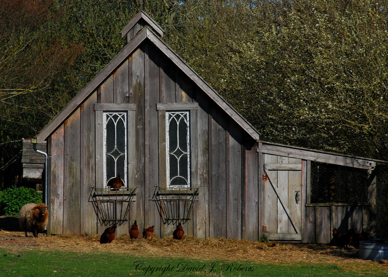 Chicken house and sheep shed