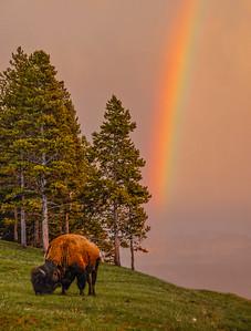 YellowstoneRainbows-18