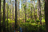 Shingle Creek, Headwaters of the Everglades, Orlando