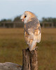 Barn Owl<br /> <br /> This is an injured, captive owl, being cared for by the good people at the Avian Reconditioning Center,Apopka, Florida