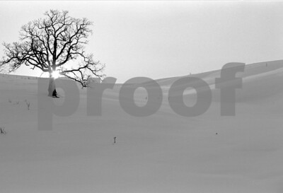 Oak tree in pasture with snow and setting sun.