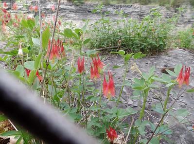 Upstate New York Hiking 2015/05/18-24