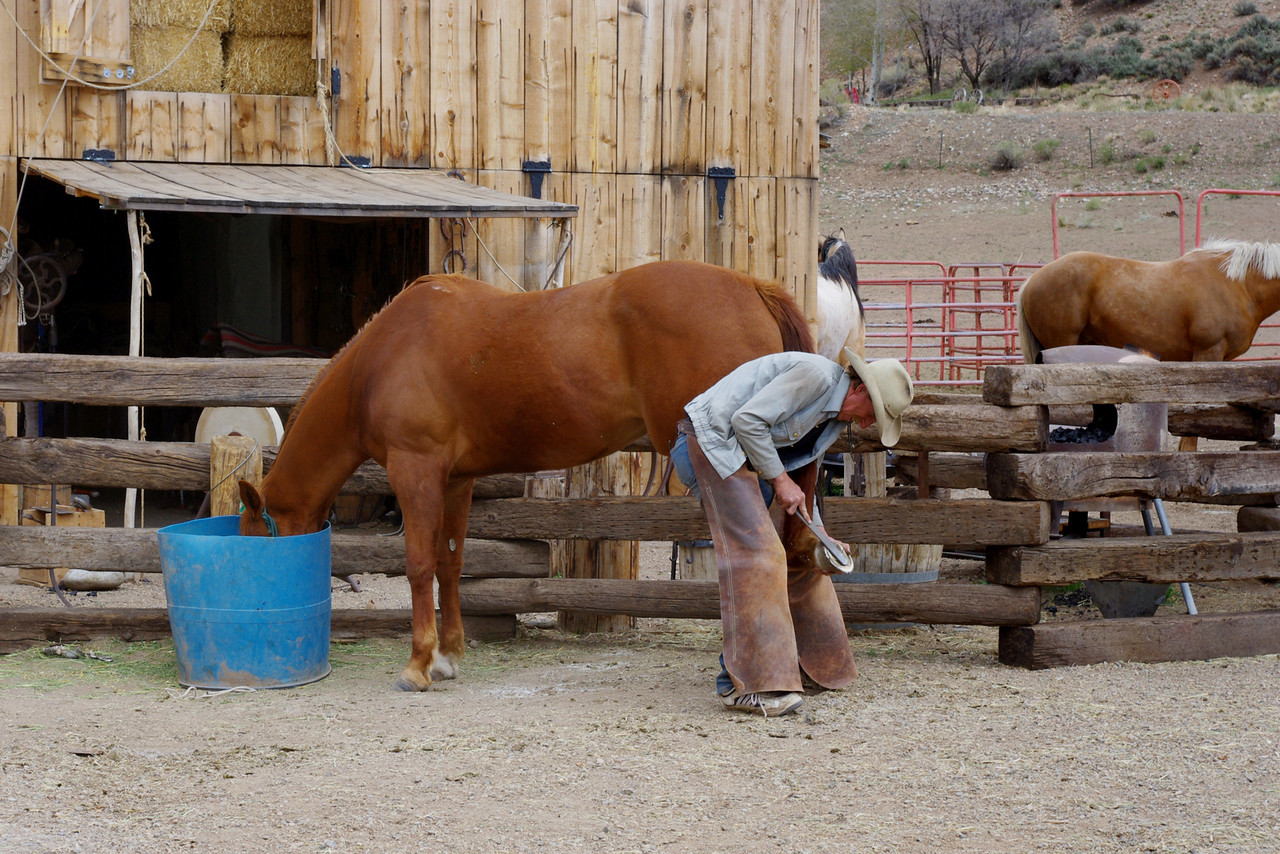 A horse being shod at the White Mountain Trading Post Living Museum, Fort Garland, Colorado.