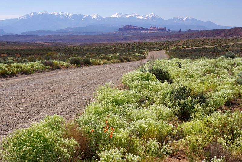 View of the La Sal Mountains from the Salt Valley Wash Road.