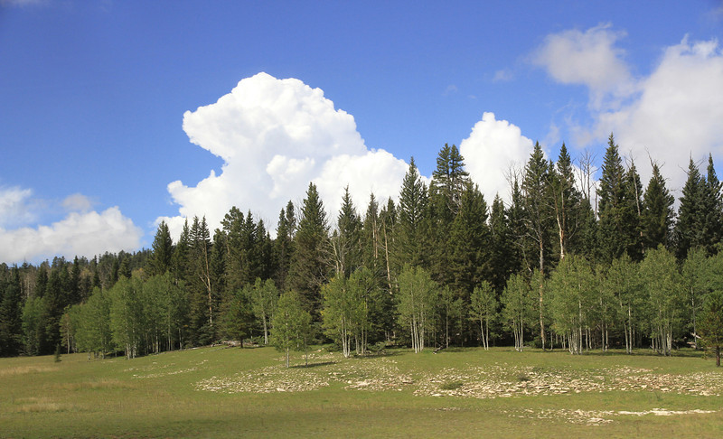 A meadow near the North Rim of the Grand Canyon.