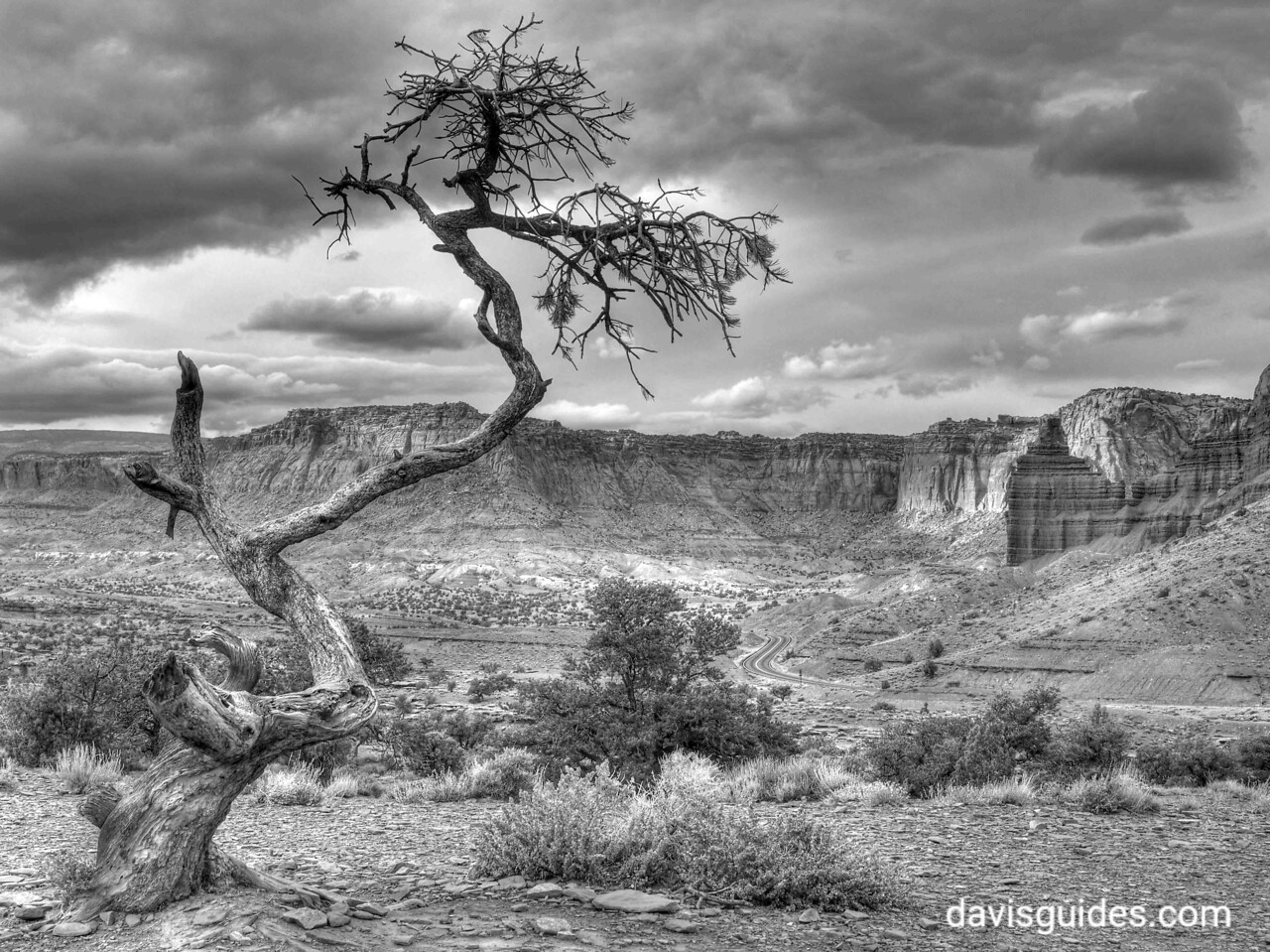 Ancient tree at Sunset Point in black and white, Capitol Reef National Park