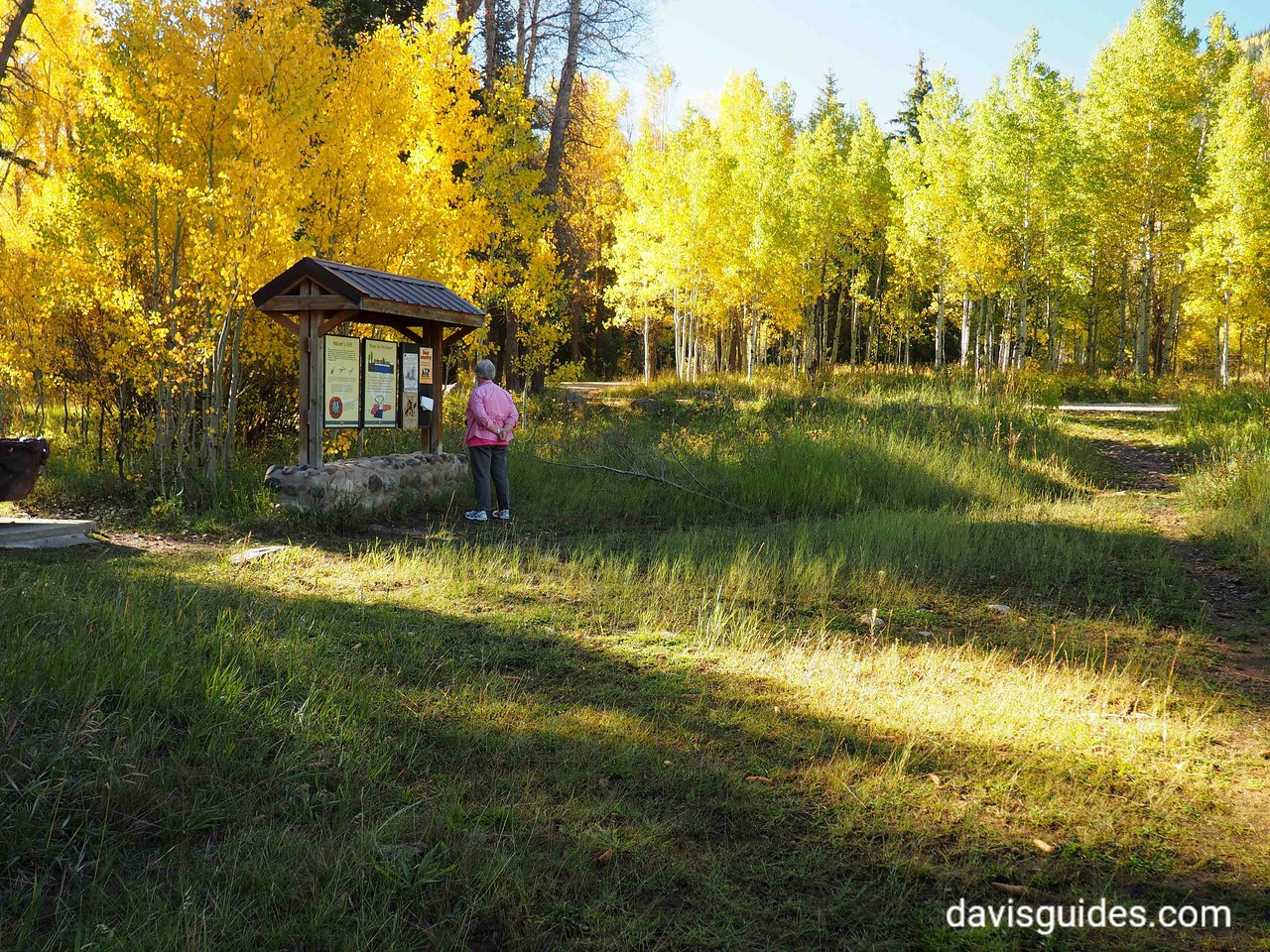 Aspens along Mirror Lake Scenic Byway