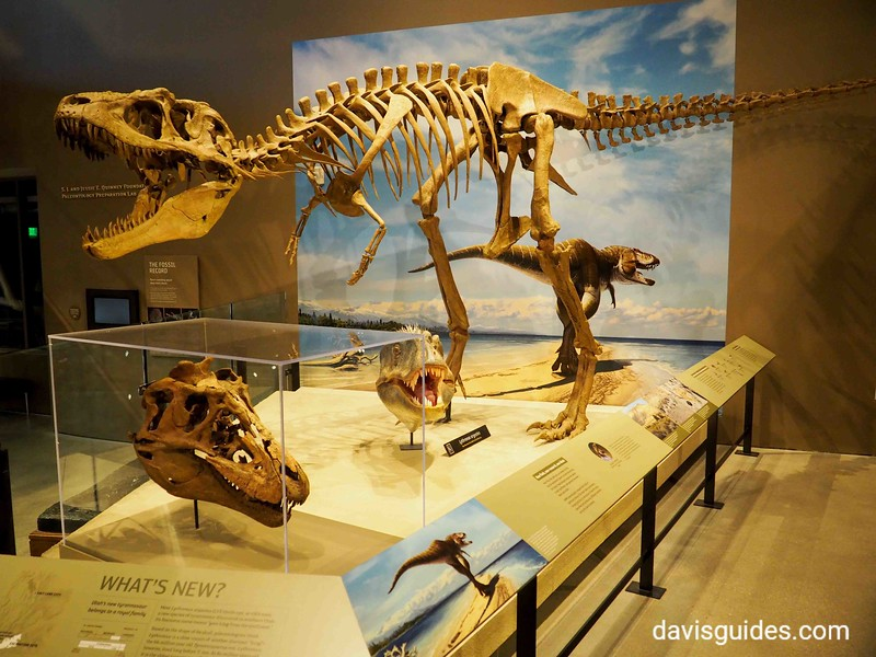 Dinosaur on display, Utah Natural History Museum, University of Utah