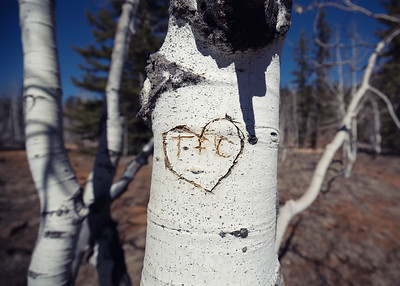 Aspen Graffiti, Dixie National Forest