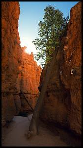 Navajo Trail, Bryce Canoyon NP