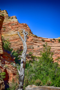 Dead wood against striated red rock. at Zion.