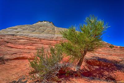 Checkered Mesa - Zion