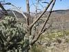 Cactus and sticks.