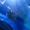 Loveland Living Aquarium in Draper, UT