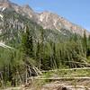 White Pine Avalanche debris