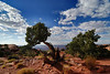 Canyonlands_0166_rs