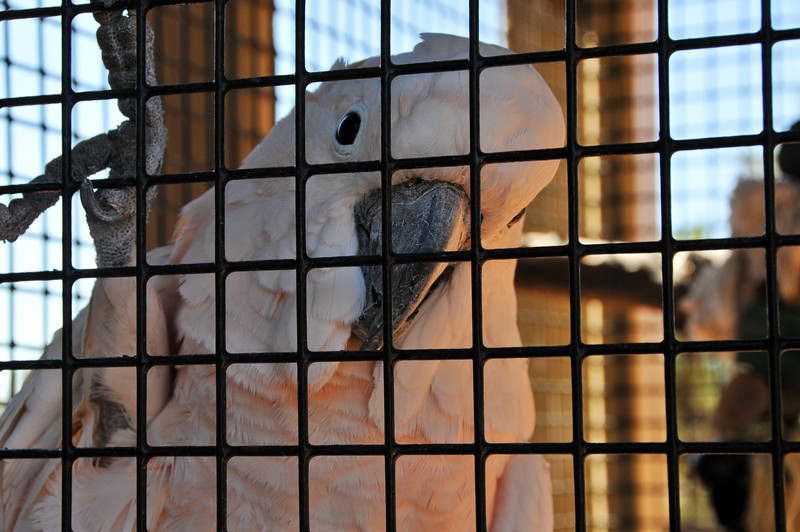 Seppi, one of the most famous residents at Feathered Friends.