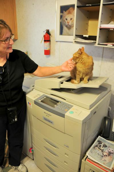 A copy-cat.