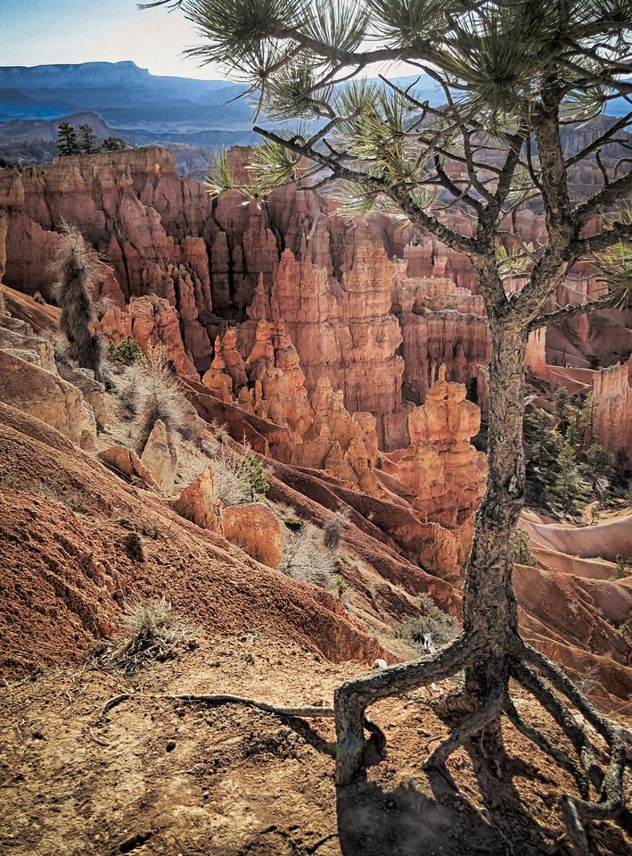 Hoodoos at Bryce Canyon National Park