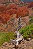 BryceCanyonNP-Utah-6-27-18-SJS-093