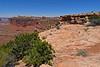 CanyonlandsNP-Utah-6-23-18-SJS-008