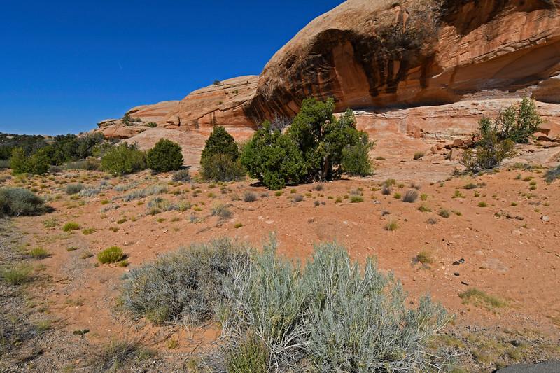 CanyonlandsNP-Utah-6-23-18-SJS-001
