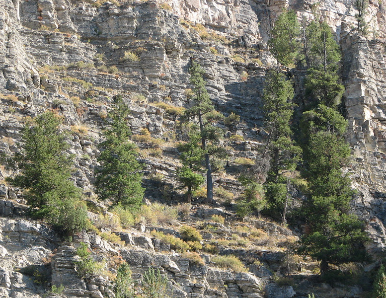 Trees Growing in Rock