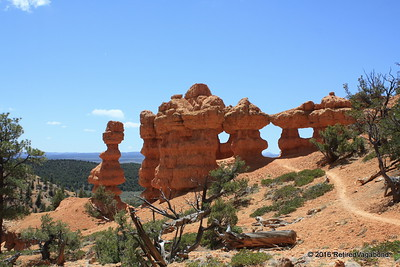 Hoodoos Red Canyon Utah