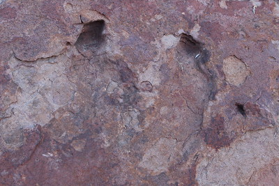 We were looking for dinosaur tracks, but found these, and several more.  Could be...