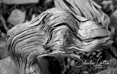Dragon in wood