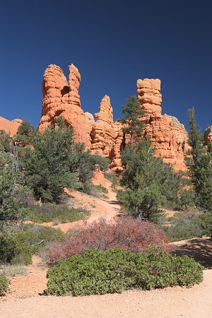 Dixie National Forest, Utah (just outside Bryce Canyon)