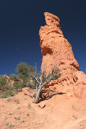 Dixie National Forest (just outside Bryce Canyon)