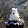 2016-10-05_Yellowstone_North Rim_4_Snowman.JPG