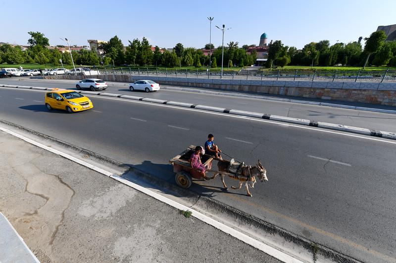 Donkey Cart - Samarkand, Uzbekistan