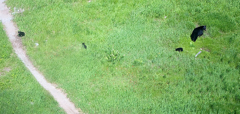 "BLACK BEAR AND ""TRIPLETS"" AS SEEN FROM WHISTLER TRAM"