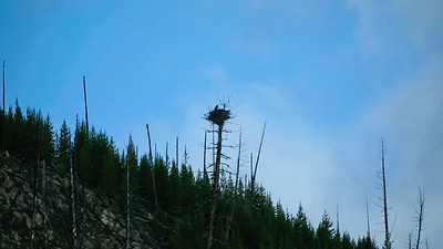 Yellowstone: 13s bald eagle nest video