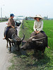 11-On the road to Ha Long, kids on water buffaloes accept money to be photographed
