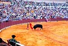 BACK TO BUSINESS<br /> But a bullfight is still a bullfight, and there was work to be done. Even though this matador put on a much better show, I still had lost all interest in documenting the event further at this point.