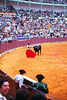 BULL BY THE HORNS<br /> This matador was so good, in fact, he was able to reach out and touch the bull's horns, much to the enthusiastic delight of the crowd. Check out the guy in the lower left corner.