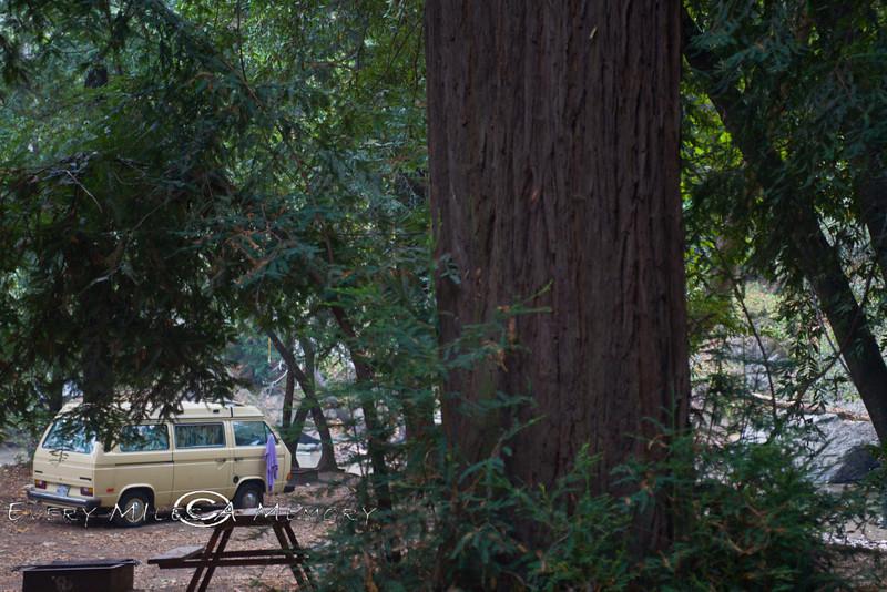 Camped amongest the Redwoods - VW Surfari - Photo by Pat Bonish