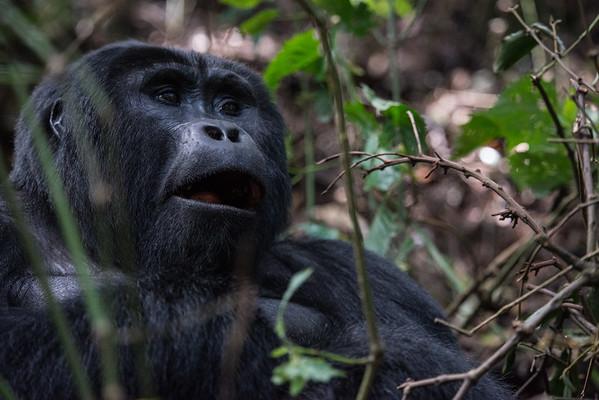 Uganda - Animals
