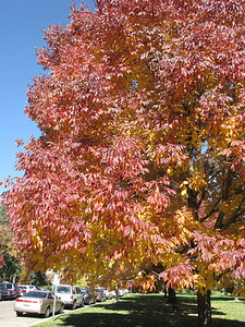 It is Fall in the Rockies.  This is in one of the denver parks near the museum of Natural Science.