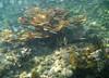baths_UW_more_coral