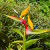 Blarney Stone; Birds of Paradise